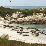 Biology students at Sierra Nevada University watched harbor seals sunning on the beach at Point Lobos State Reserve in California, on a spring field course in animal diversity.