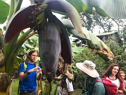 a banana flower in Costa Rica