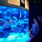 Sierra Nevada University science students Nathan Rock and Andrew Miller watch a tank of silver Lookdown fish from the Baja California coast at the Monterey Aquarium during the science department spring trip